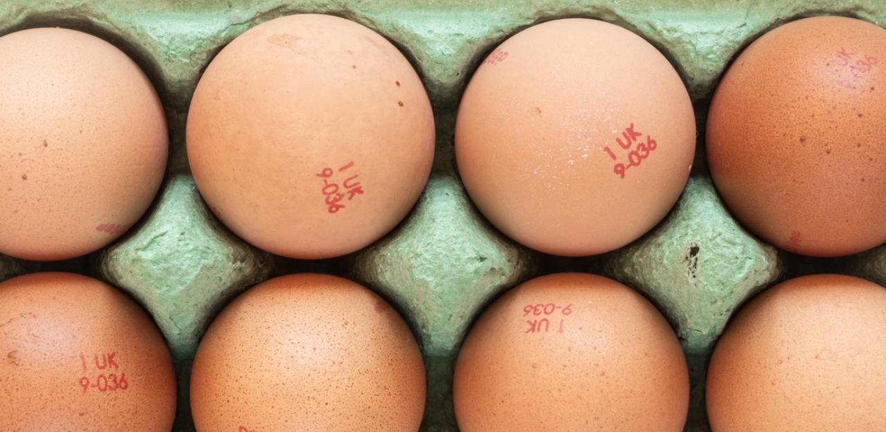 Warum du ständig Käfig-Eier isst, ohne es zu wissen - HeuteTierisch - heute.at