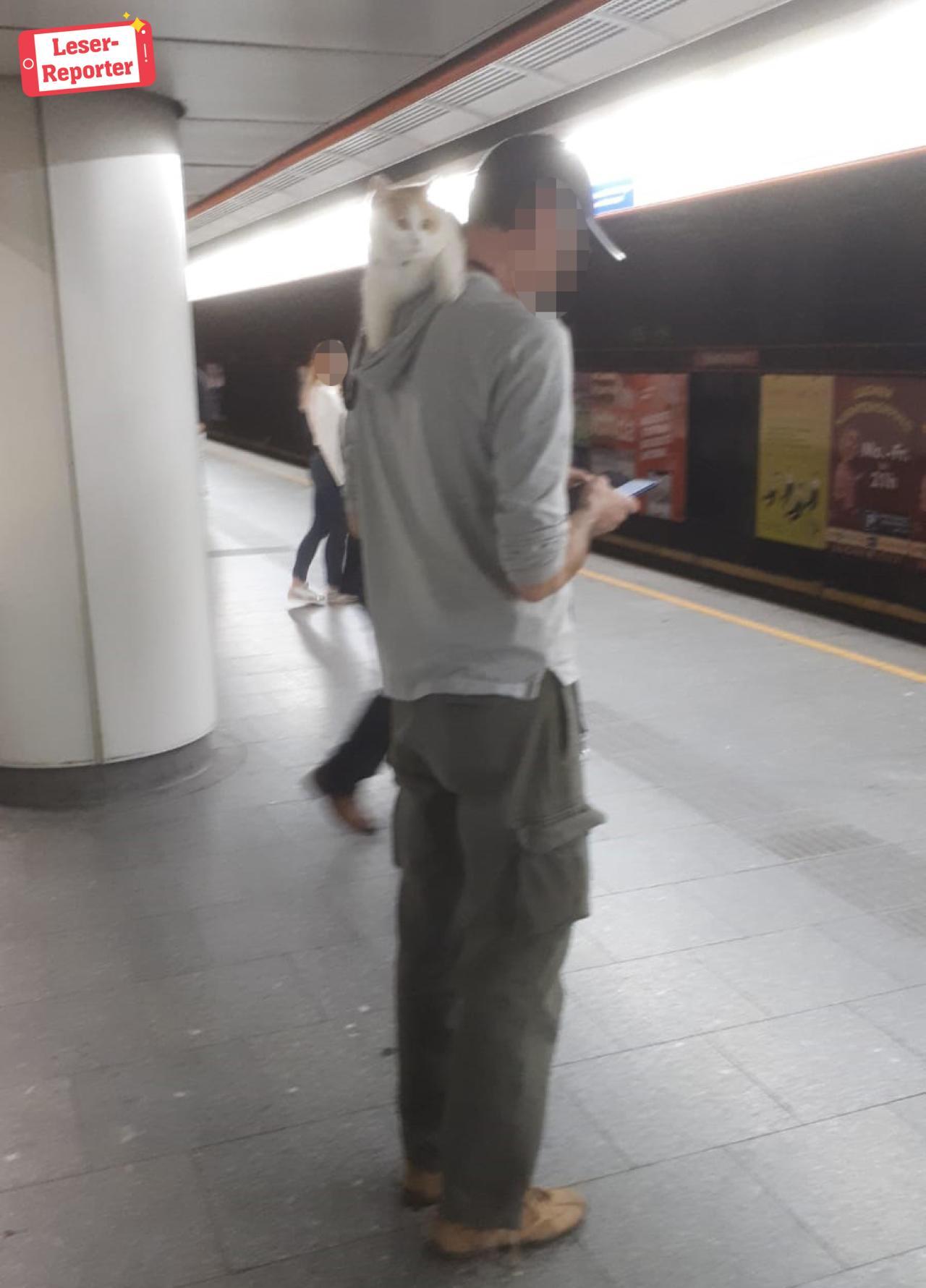 Mann spaziert mit Katze auf Schulter durch Wien