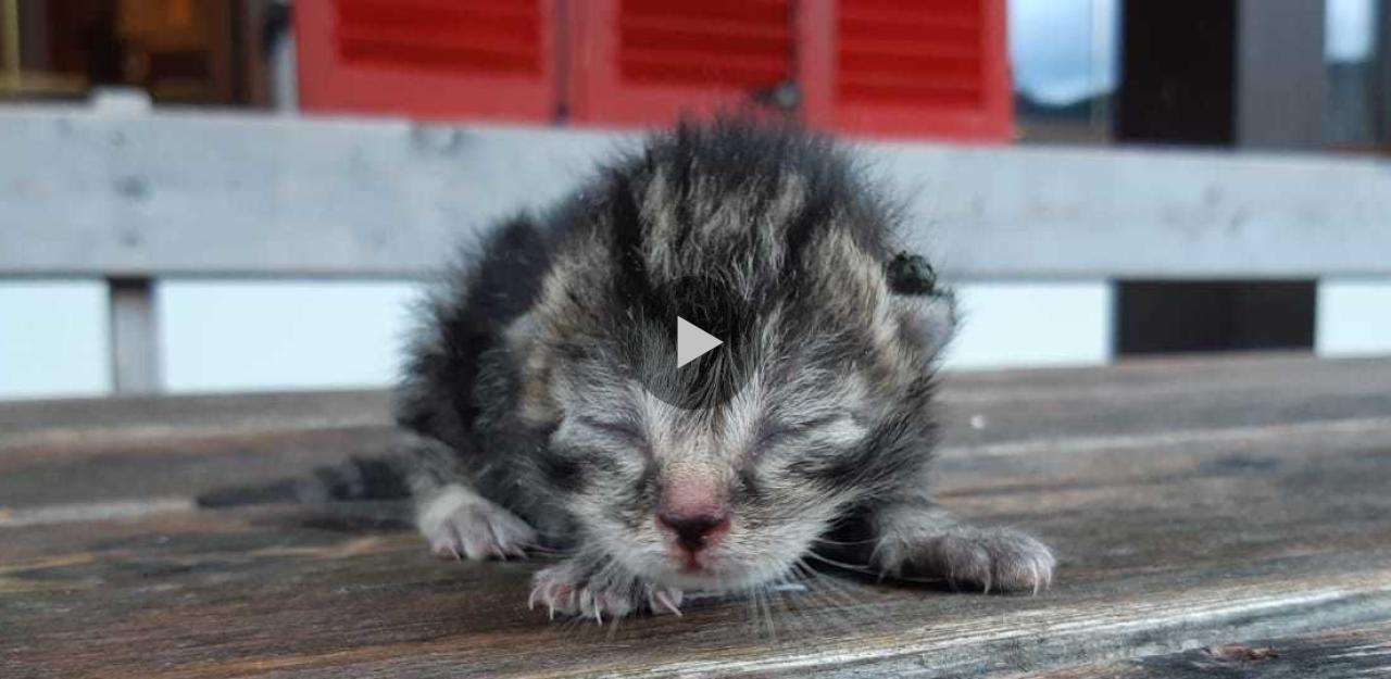 Dieses Katzenvideo ist Balsam für die Seele - HeuteTierisch - heute.at