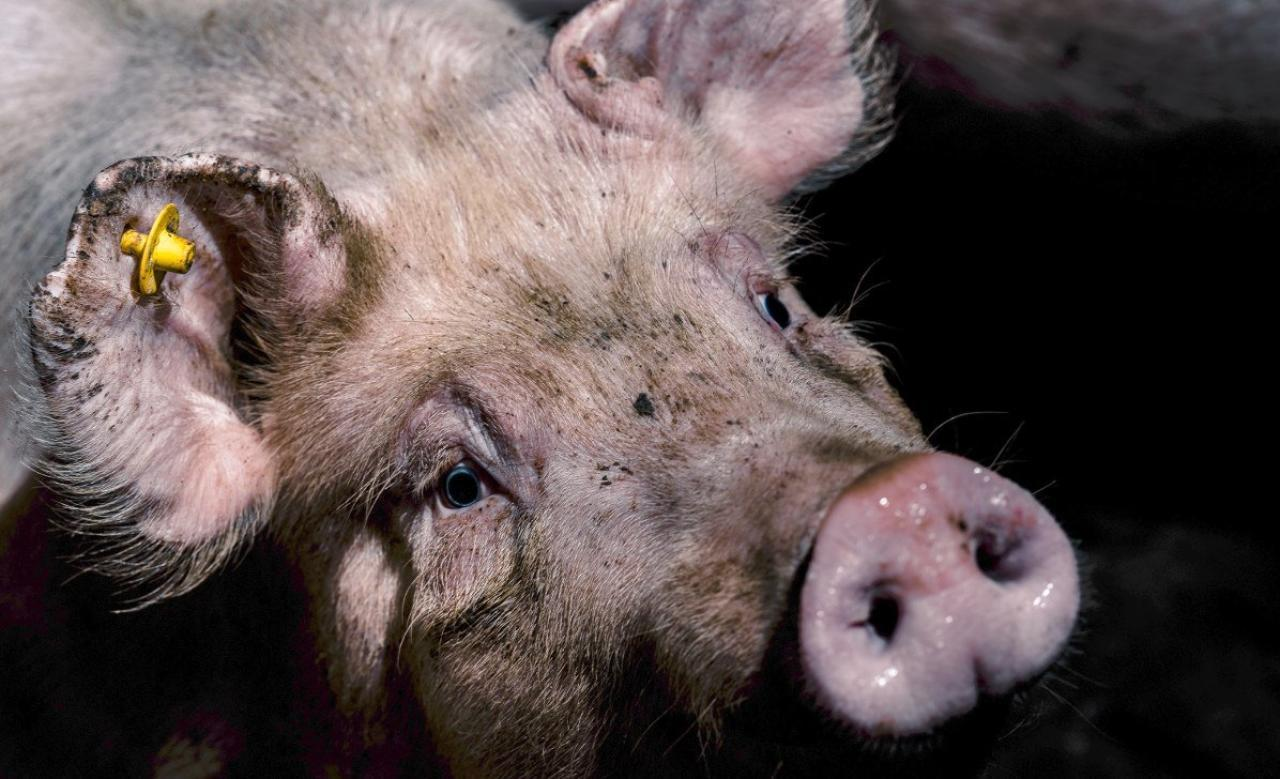 FPÖ und ÖVP sagen Nein zu mehr Tierschutz