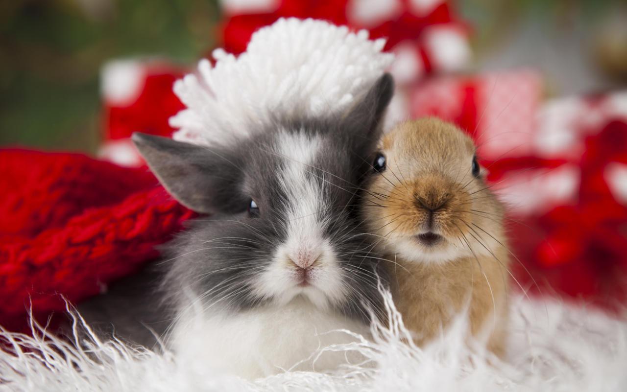 Auch Nagetiere sind keine Weihnachtsgeschenke