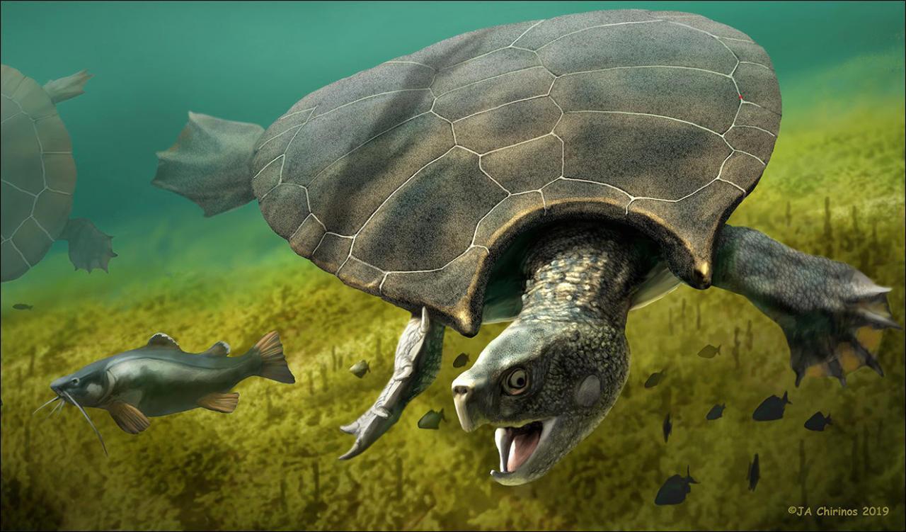 Schildkröte war 3 Meter lang und hatte Hörner