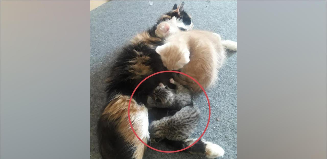 Diese KatzenMama zieht zwei FindlingsBabys auf