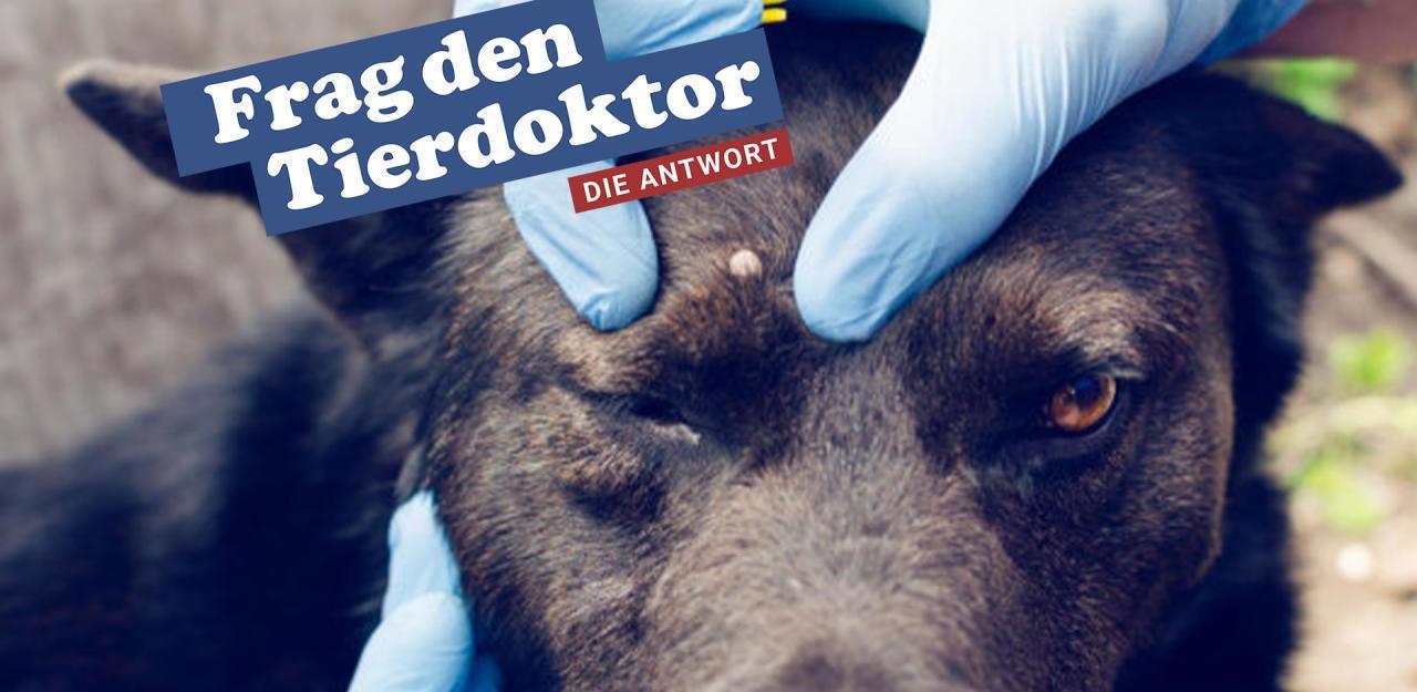 Zecken Für Hunde Gefährlich