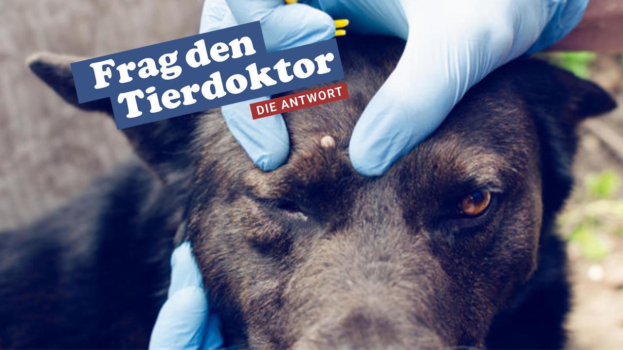 Sind Zecken für Hunde wirklich so gefährlich