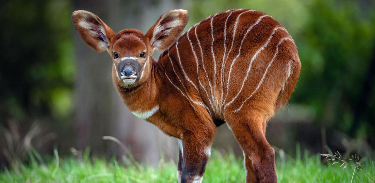 Dieses extrem seltene Säugetier stirbt bald aus - HeuteTierisch - heute.at