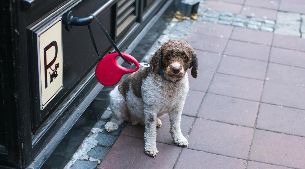 Wir suchen alle 2 Wochen einen entführten Hund