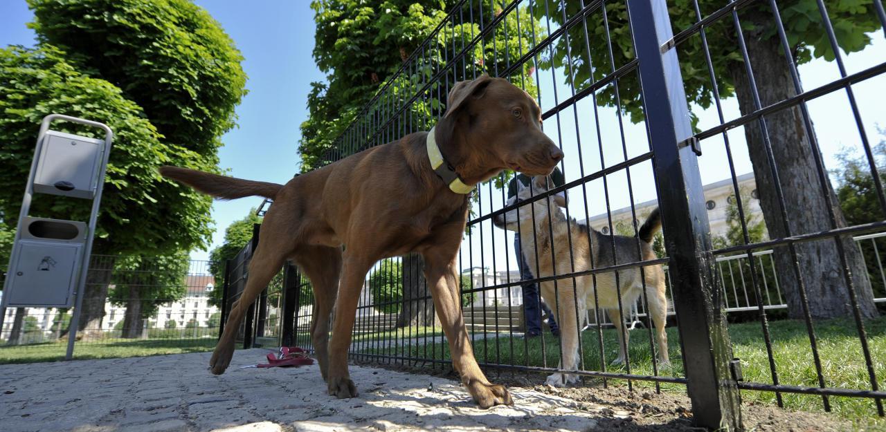 Alle Hundebesitzer in Wien müssen zu diesem Kurs