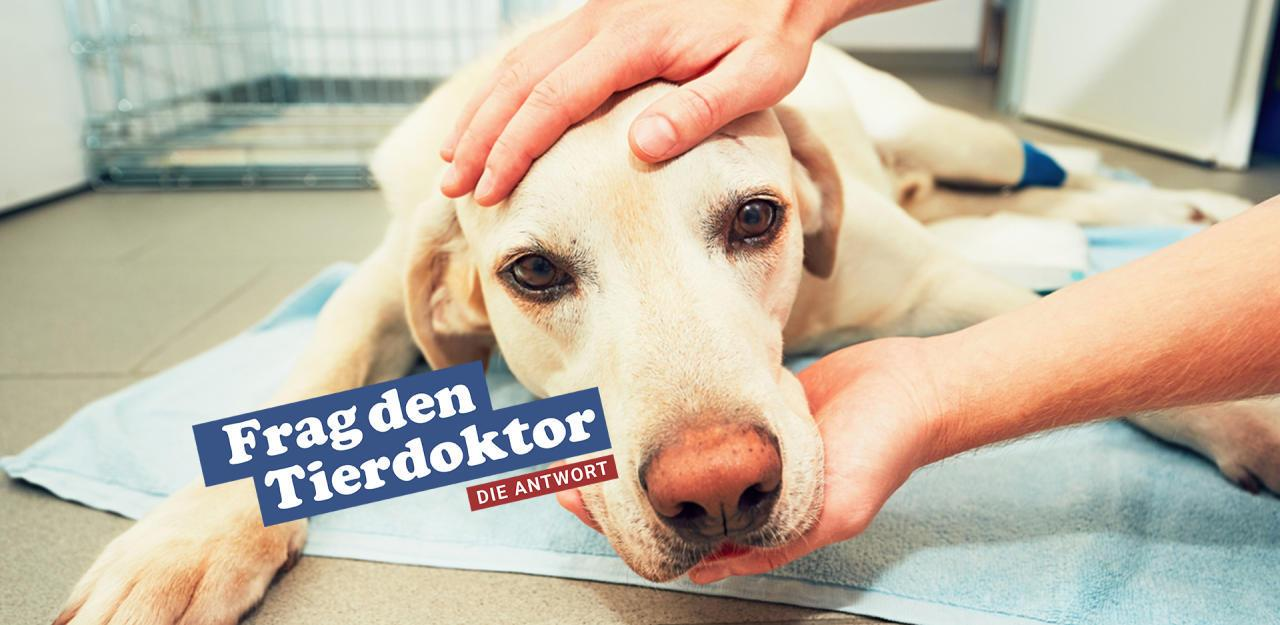 Hund Hat Verpackung Gefressen