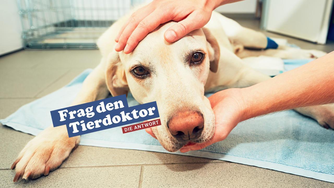 Daran erkennen Sie ob Ihr Hund Gift gefressen hat