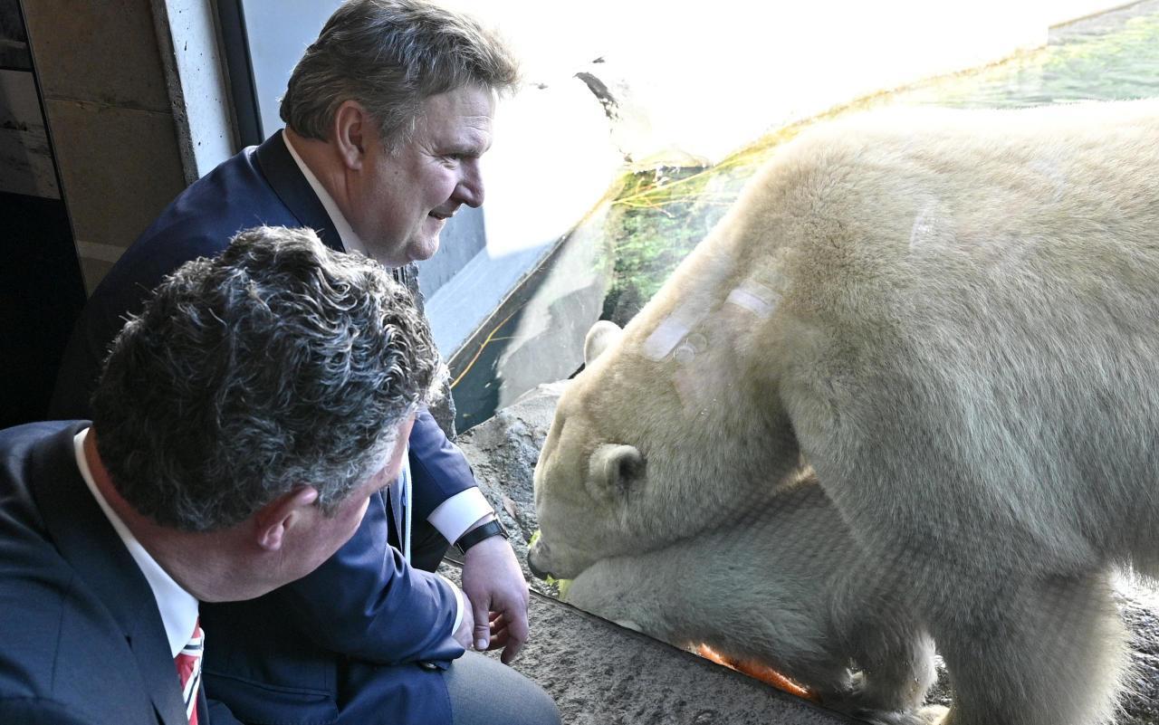 Ludwig ist Pate von EisbärenMädchen Finja