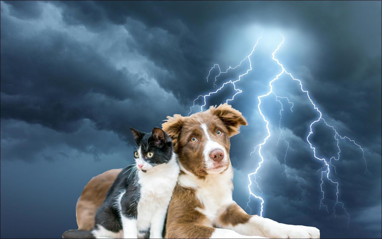 So unterstützen Sie Ihren Liebling bei Gewittern