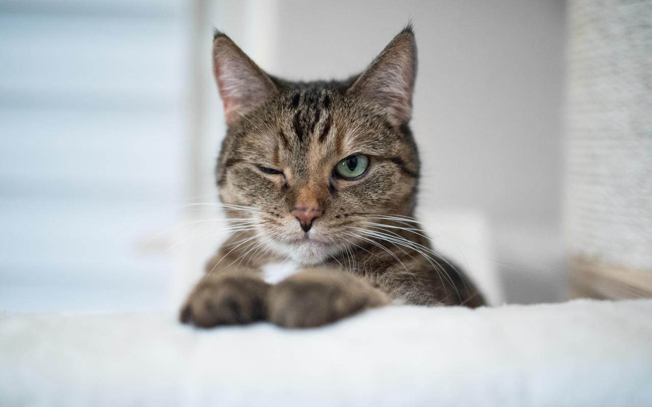 9 LebensLektionen die Katzen ihren Besitzern geben