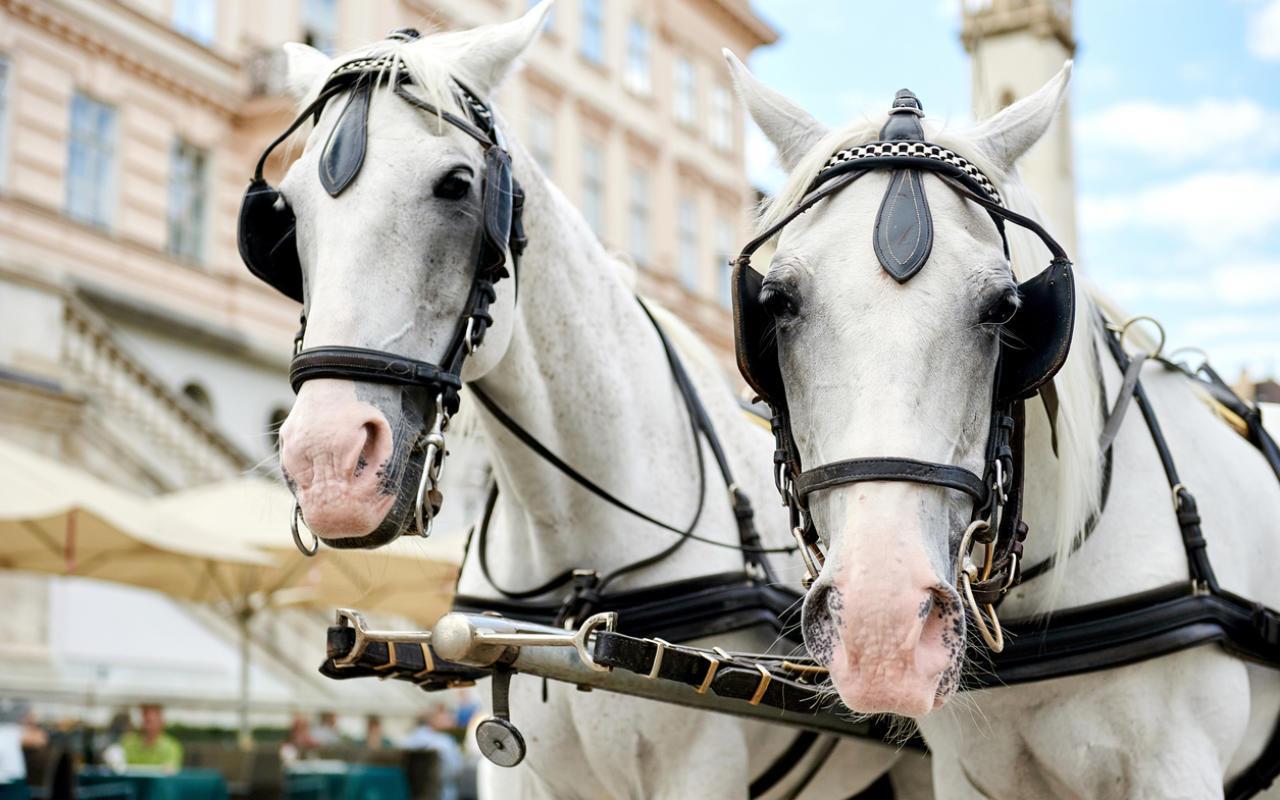 EFiaker statt echte Pferde bis Ende 2021