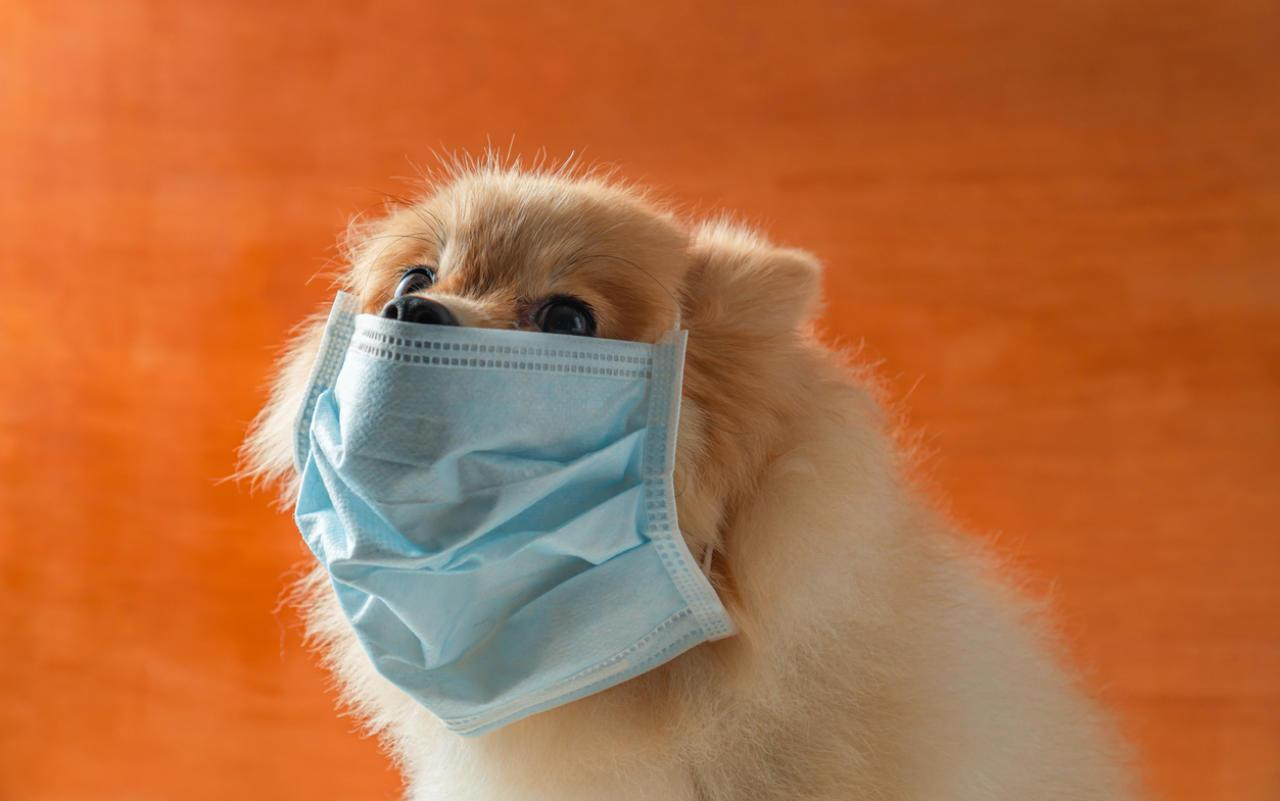 Können Haustiere Coronavirus übertragen