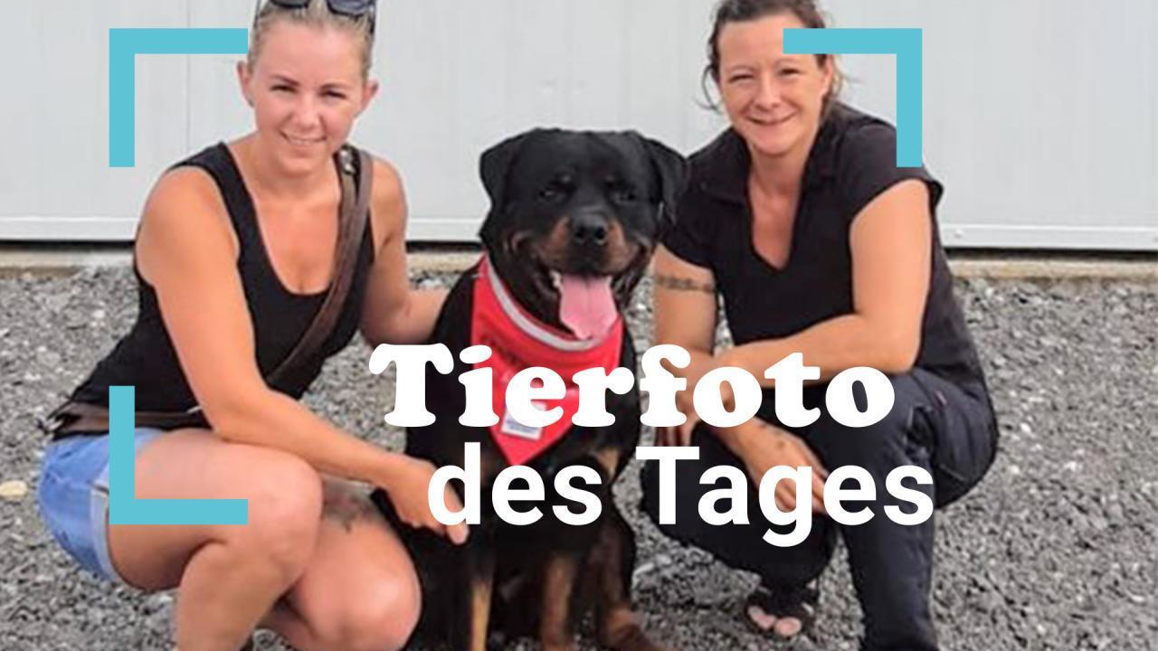 Franky der Rottweiler wird Therapiebegleithund