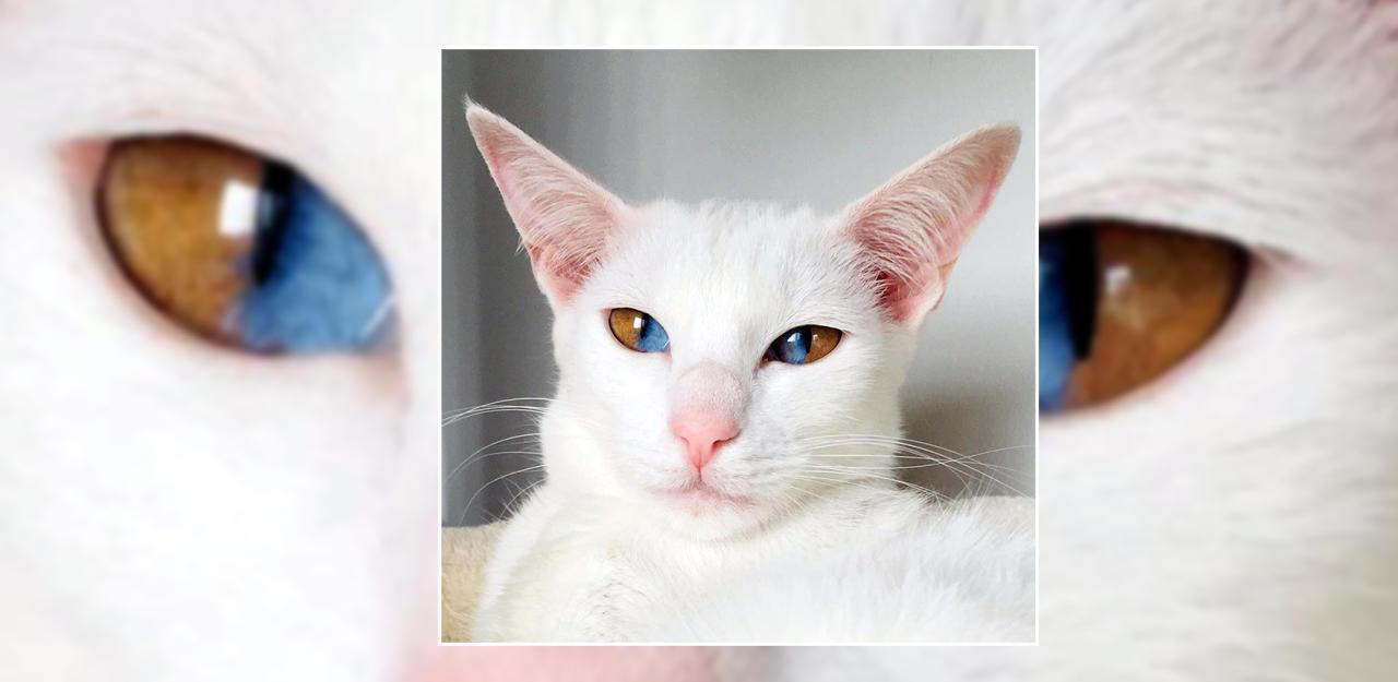 Diese Katze hat zwei zweifärbige Augen - HeuteTierisch - heute.at