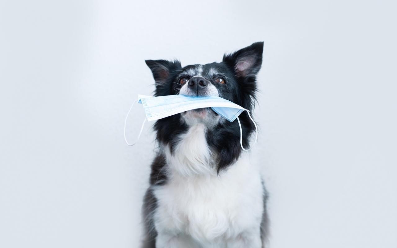 Tierheim vergibt jetzt tierische Schutzmasken