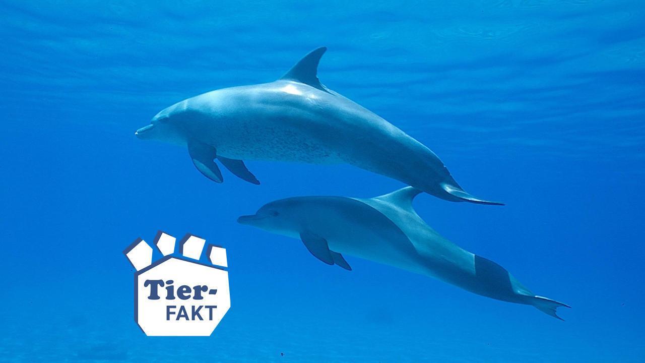 Wussten Sie dass Delfine sich Namen geben