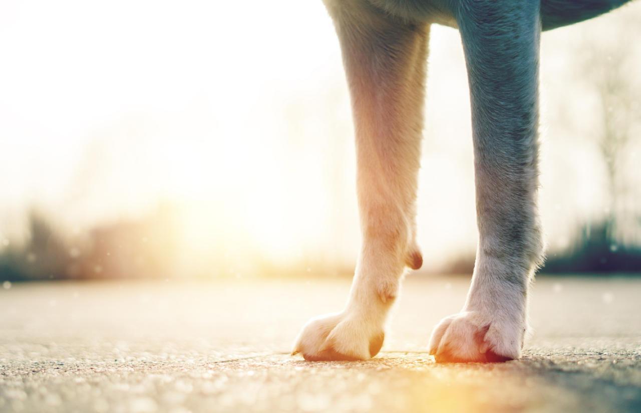So testen Sie ob Asphalt für Hunde zu hei� ist