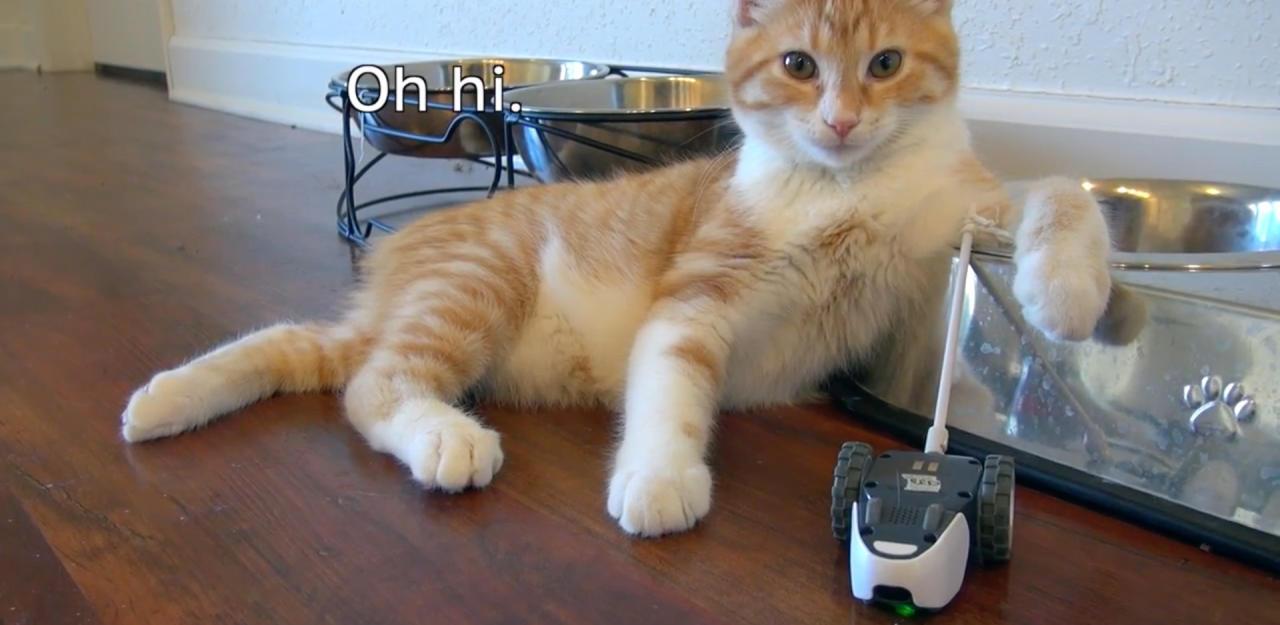 Smarte Mäuschen für Ihre Hauskatze