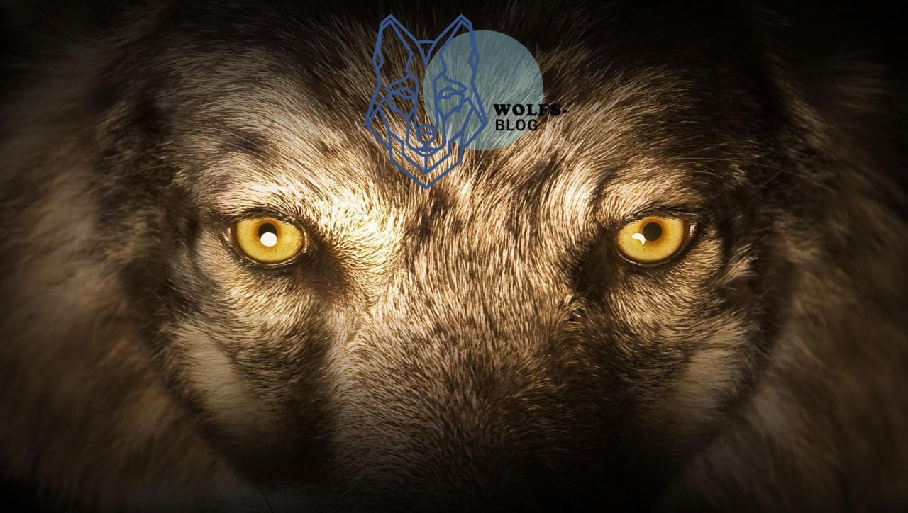 Flei�ig wird die Angst vor dem bösen Wolf geschürt