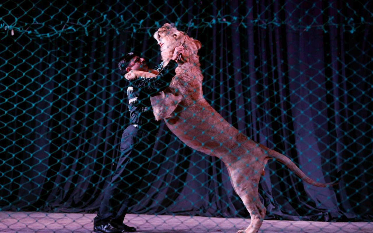 Unfälle mit Tieren im Zirkus vorprogrammiert