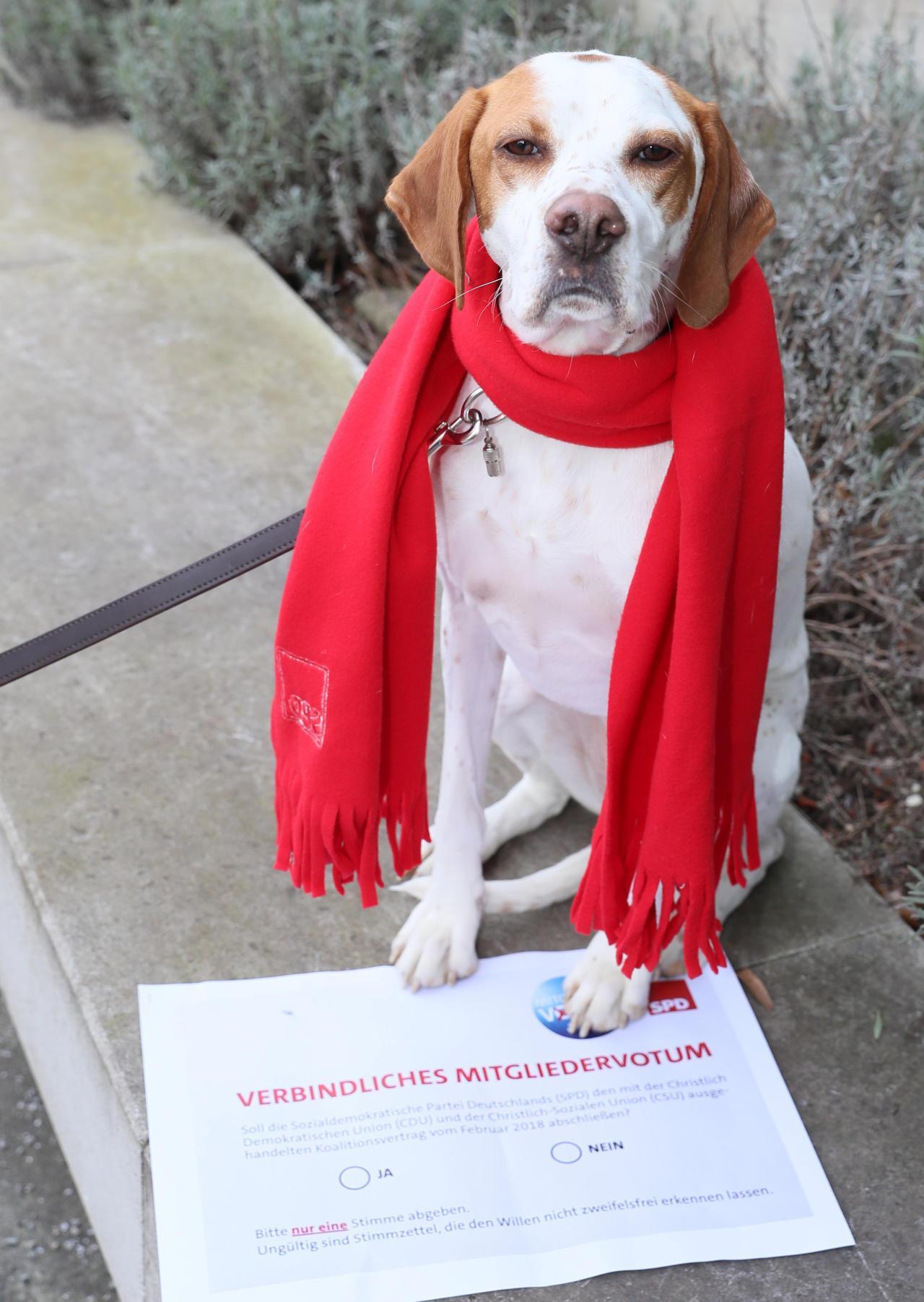 Dieser Hund darf über die GroKo abstimmen