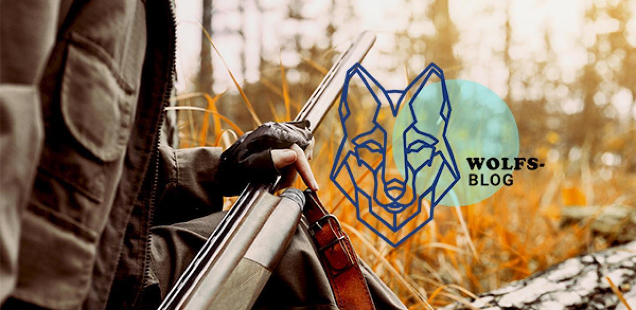 Kaum Wölfe in Österreich weil sie gewildert werden