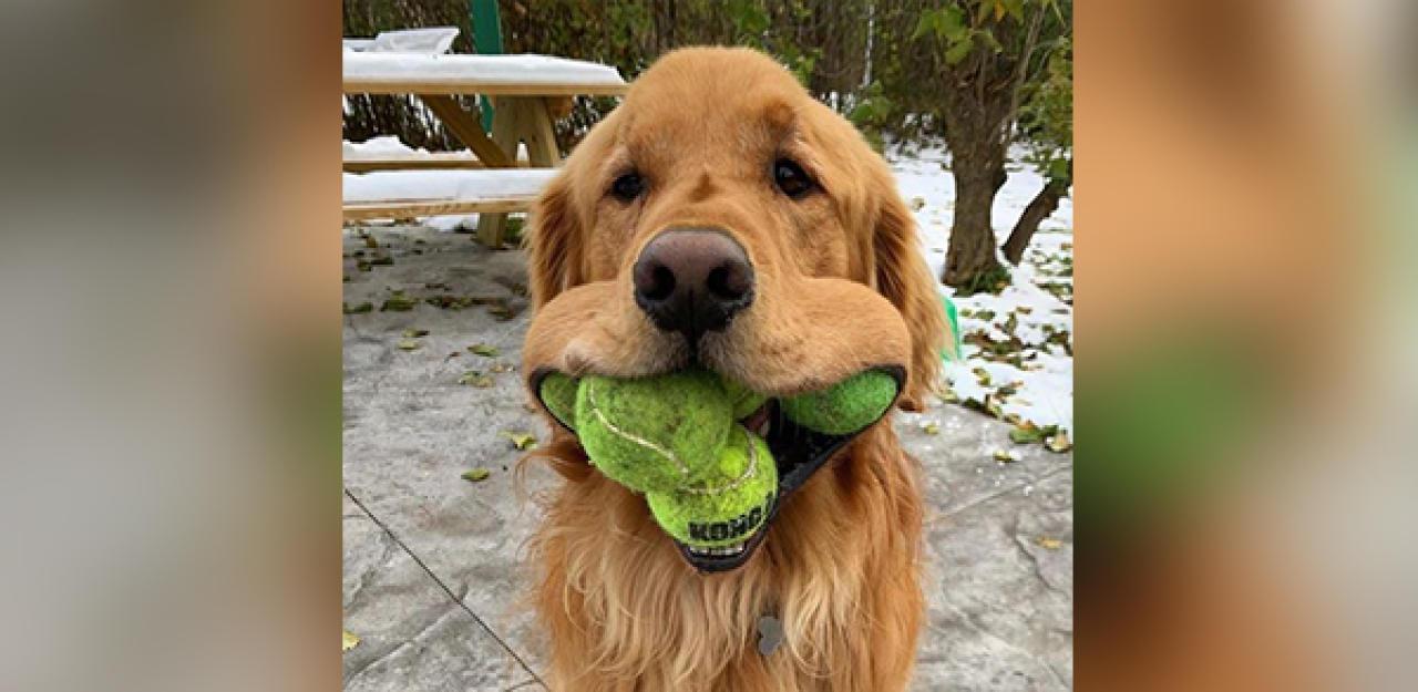 Hund stellt Weltrekord auf Rate mal welchen