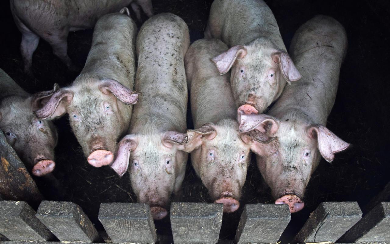 FPÖ verkauft Tierschutz und Wähler für dumm