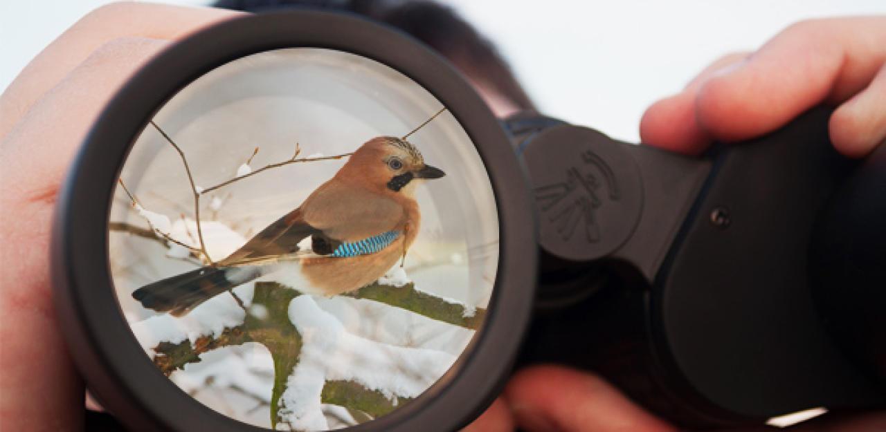 Grö�te Vogelzählung Österreichs  mach mit