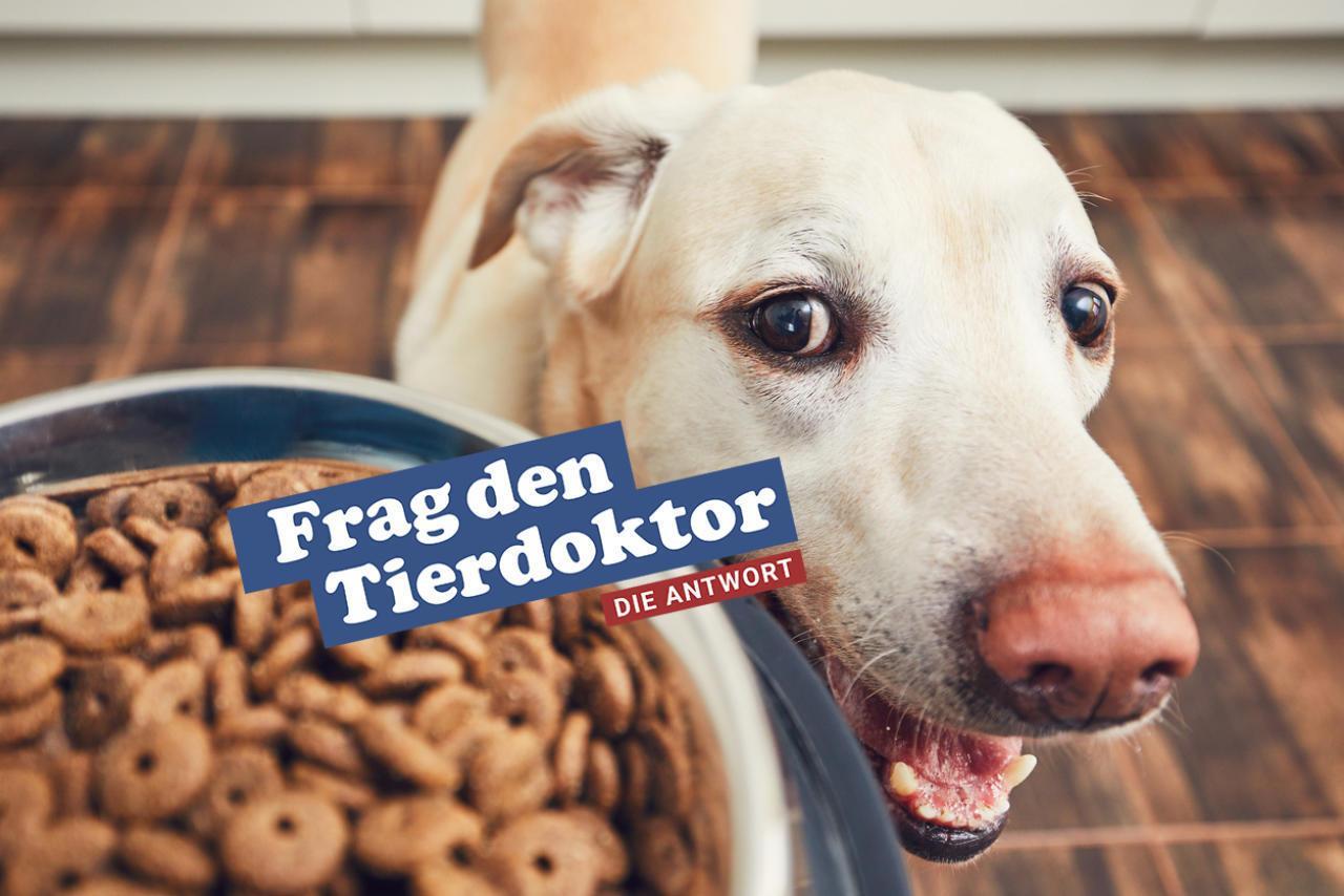 Trocken oder Nassfutter Was ist besser für Hunde