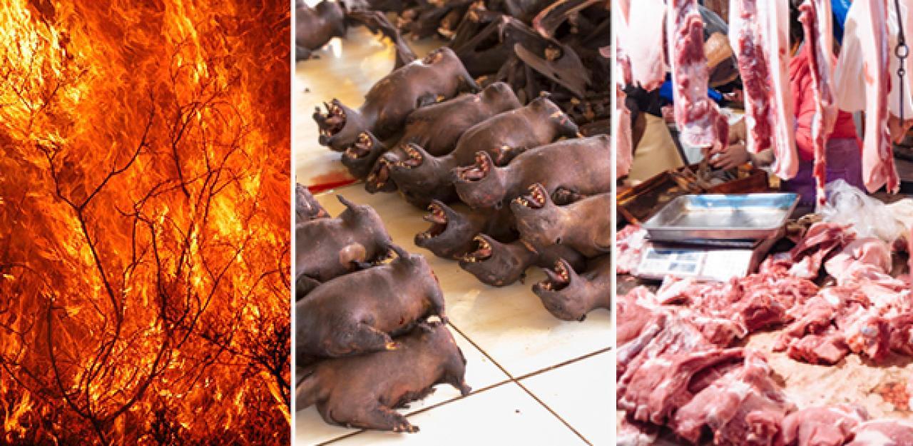 Ausbeutung von Tier und Natur Grund für Pandemie