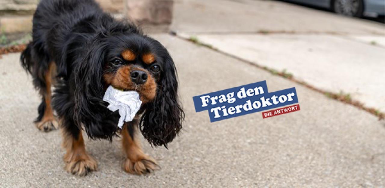 Mein Hund frisst gerne benutzte Taschentücher