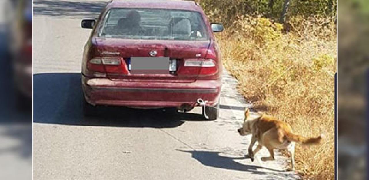 Mann bindet Hund an Auto, schleift ihn hinter sich her - HeuteTierisch - heute.at