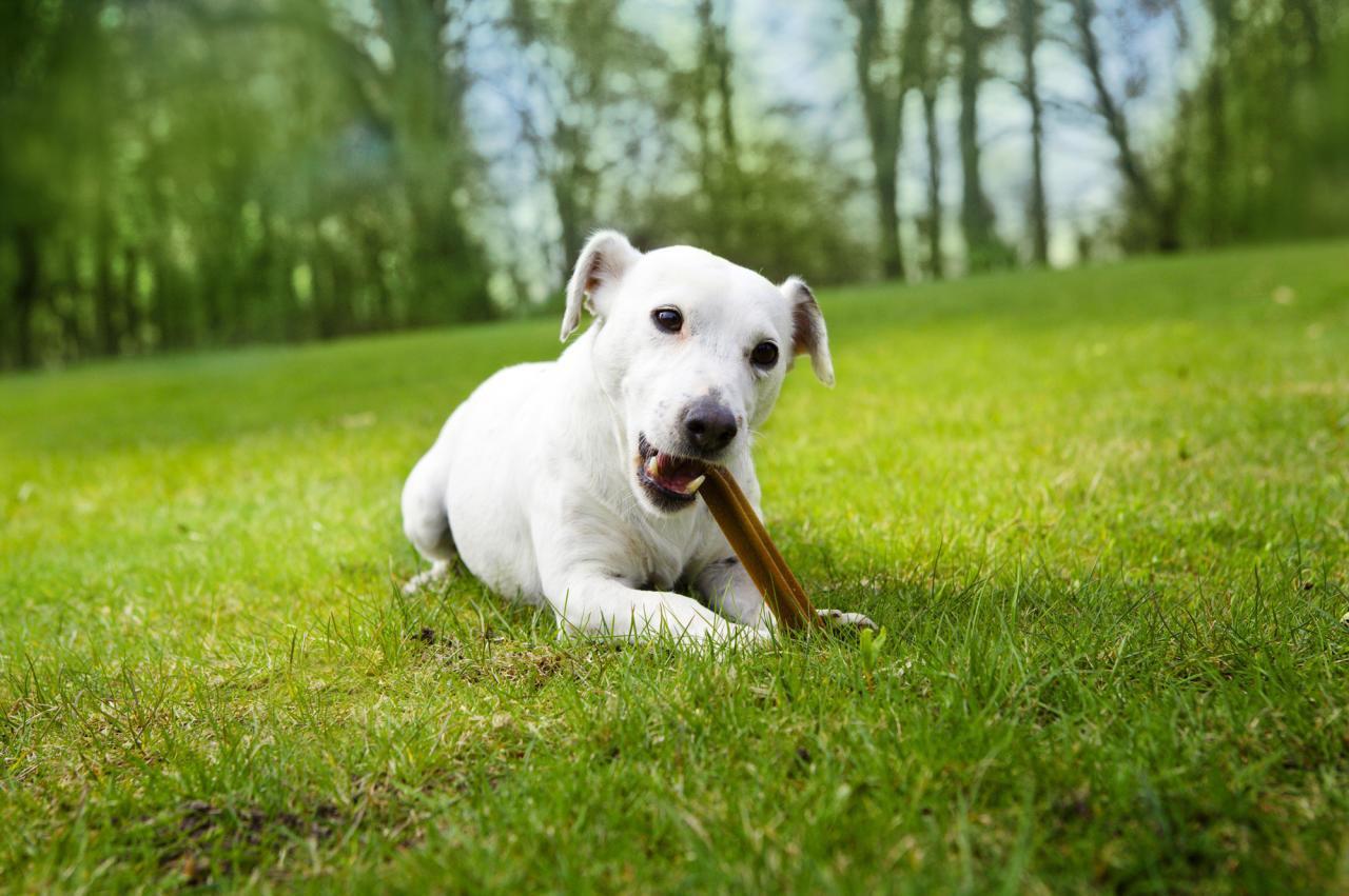 Zähne gut Leben gut  Richtige Zahnpflege bei Hunden zählt