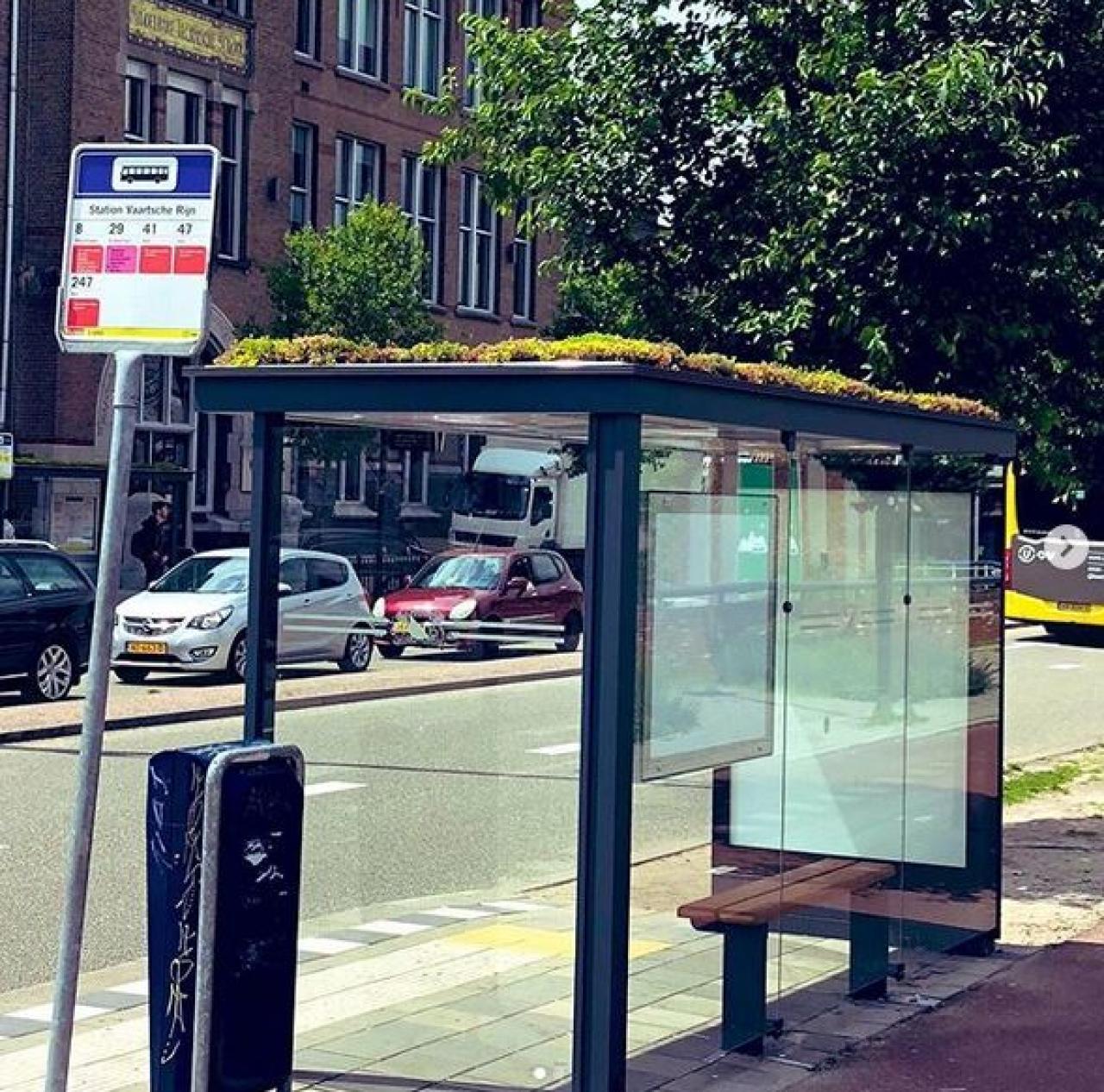 Diese Bushaltestellen sollen Bienen retten