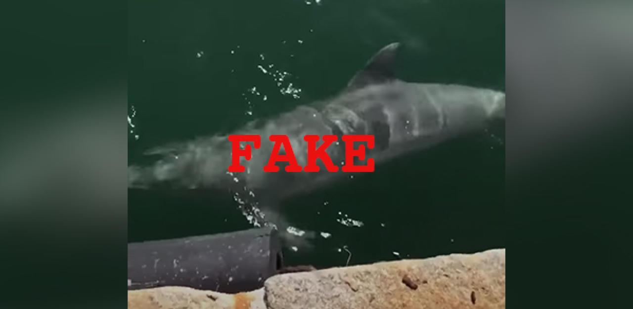 Nicht in Venedig  hier waren Delfine wirklich