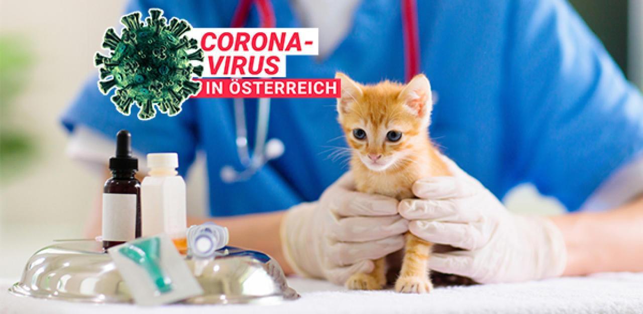 Heimische Tierärzte brauchen dringend Hilfe