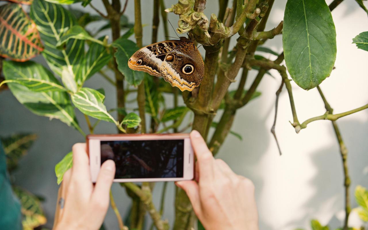 Gro�e SchmetterlingsZählung in Österreich