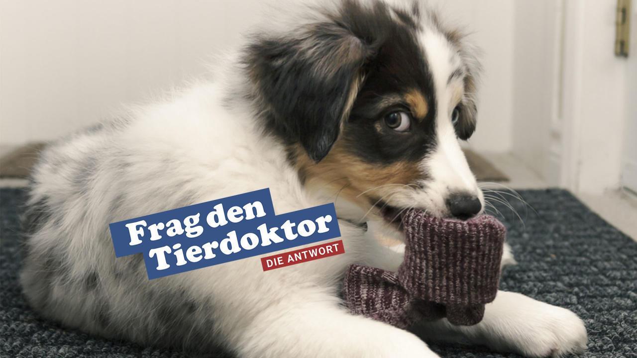 Hilfe Mein Hund isst meine Unterwäsche