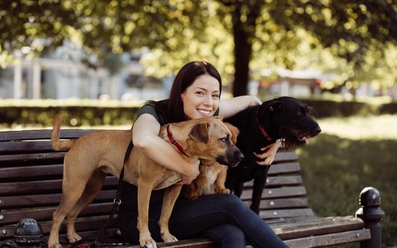 Hundefriseur TierPension  wer hat offen wer nicht