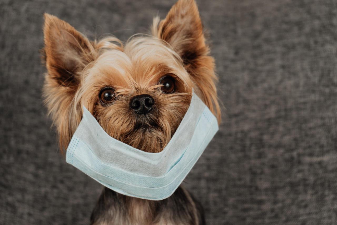Erster Hund wegen Coronavirus in Quarantäne
