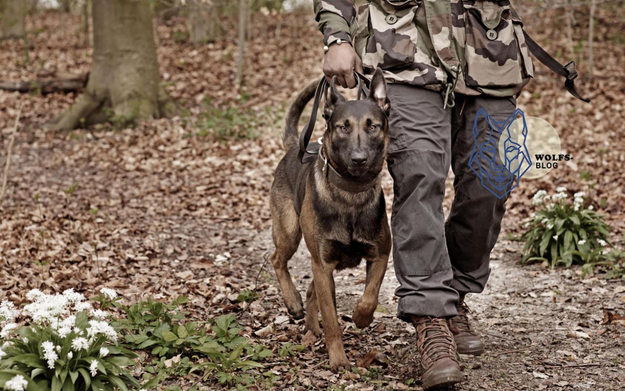 Toter Hundeführer  War es der Wolf im Hund