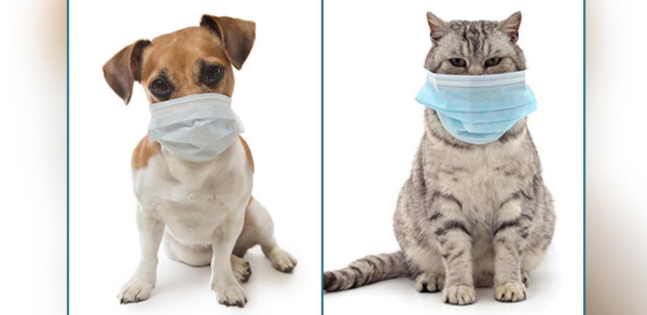 Erste Regierung Quarantäne für Tiere von Infizierten
