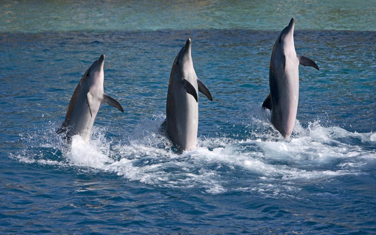Kanada verbietet Delfine und Wale in Freizeitparks
