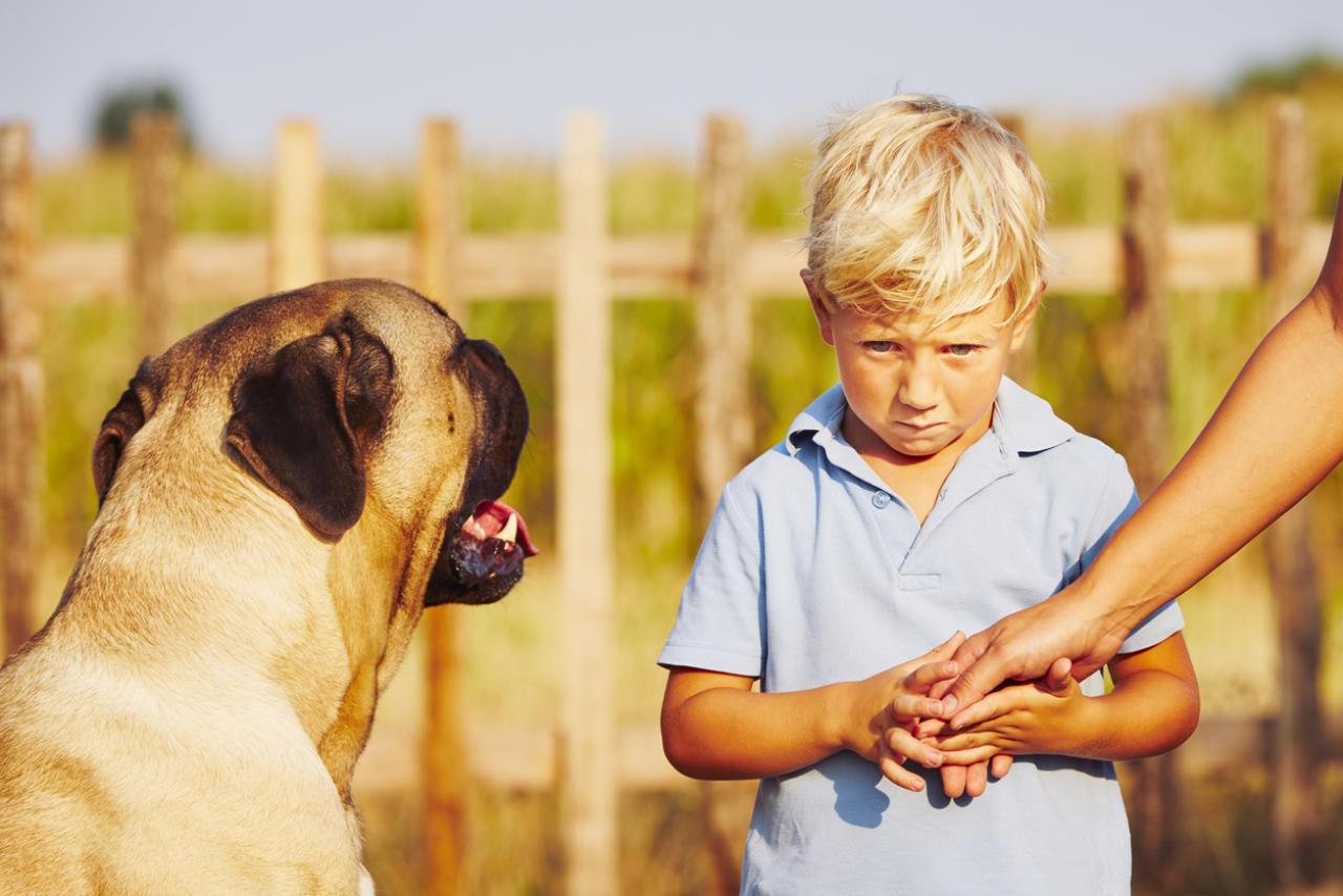 Warum haben Menschen Angst vor Hunden