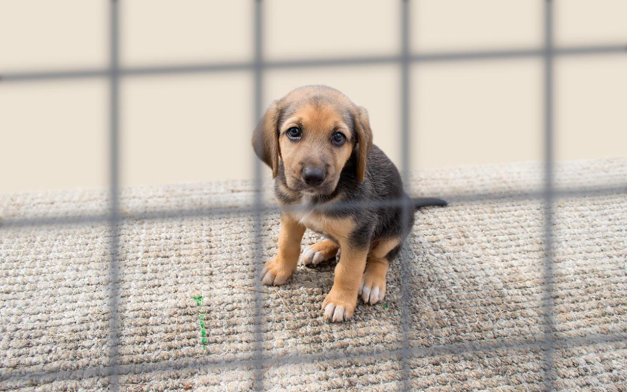 So könnte die EU illegalen Haustierhandel bekämpfen