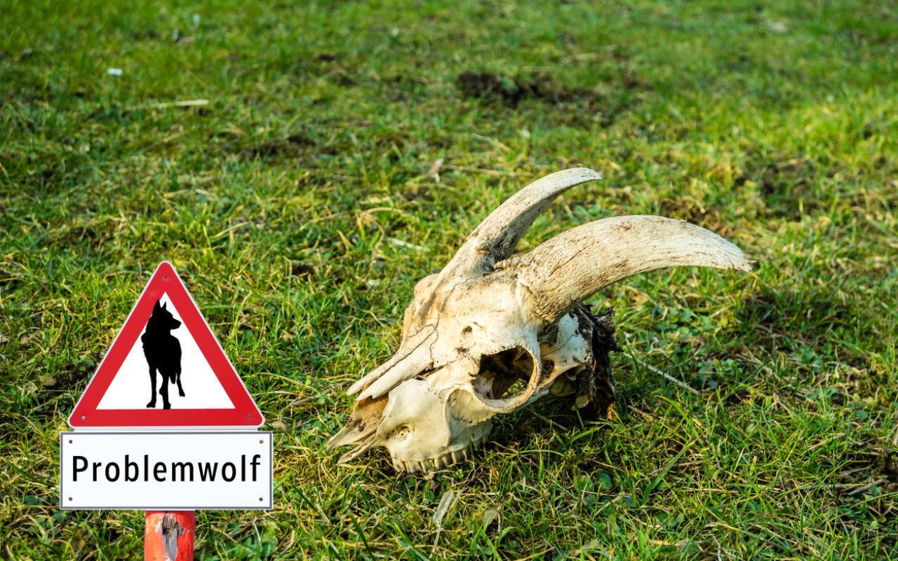 Gefährliche HalbWahrheiten um den Wolf